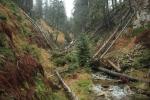Koulový potok